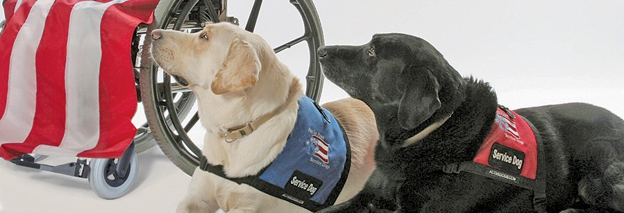 Image of: Gear Previousnext Accomodationintuscanyorg Patriot Paws Serving Those Who Have Served