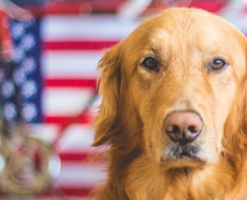 Doggy-Patriot